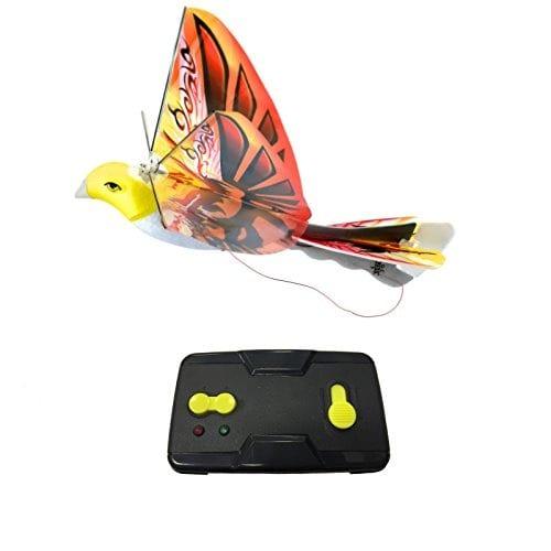 eBird Orange (Phoenix)